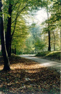 Drum-prin-padure